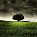 hill-field-tree-clouds-dark-clouds-grass-2048x2048
